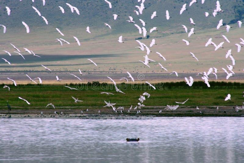ngorongoro Τανζανία κρατήρων της Αφ&rho στοκ φωτογραφίες με δικαίωμα ελεύθερης χρήσης