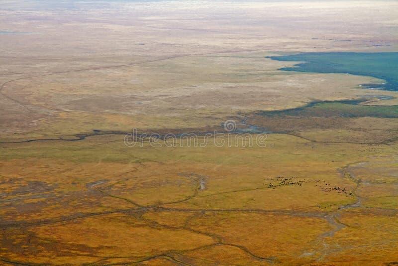 Ngorongoro Crater Floor with Buffalo Herd royalty free stock photo