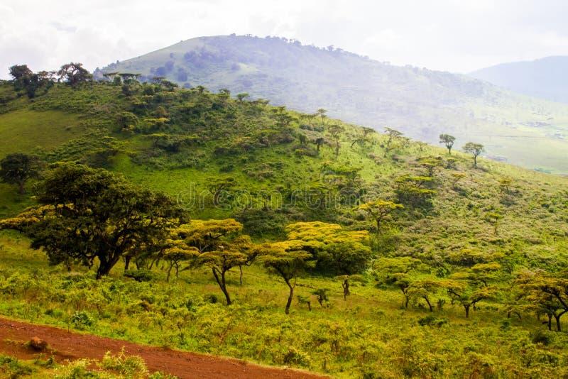 Ngorongoro-Naturschutzgebiet-Landschaft und wild lebende Tiere stockfotos