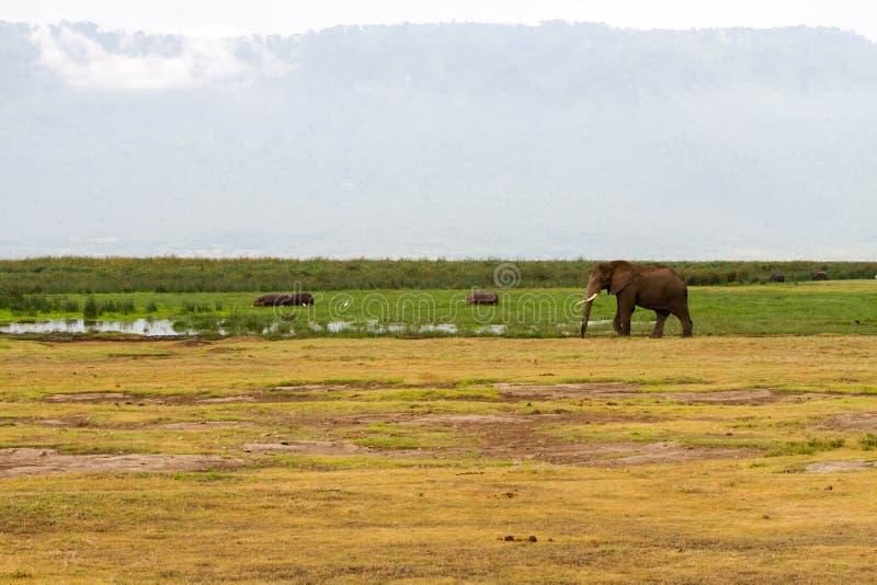 Ngorongoro-Naturschutzgebiet-Landschaft und wild lebende Tiere stockfoto