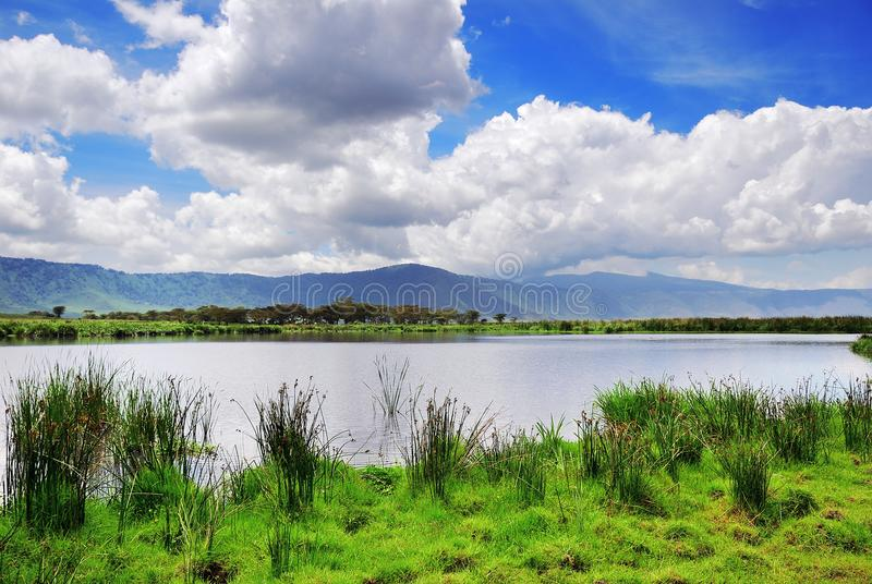 Ngorongoro Tanzania, Afrika arkivfoto