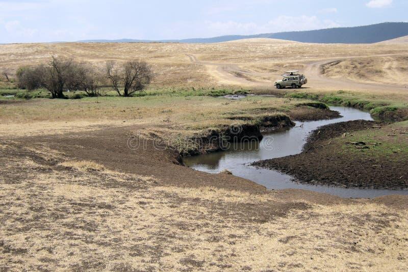 Ngorongoro - Tanzania - landskap för torrt gräs med floden royaltyfri fotografi