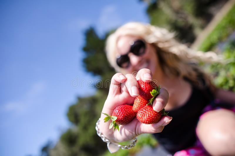 Ângulo artístico de uma fêmea que escolhe morangos de um campo de exploração agrícola Foco nas morangos, mulher dentro intenciona fotografia de stock
