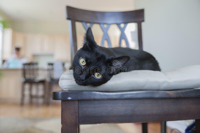 Ângulo largo animal do gato preto fotografia de stock royalty free