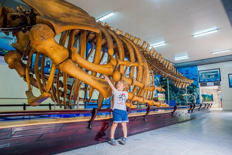 NHA TRANG WIETNAM, STYCZEŃ, - 16, 2017 A wielorybi kościec przy Krajowym Oceanograficznym muzeum Oferty ciekawi eksponaty zdjęcie royalty free