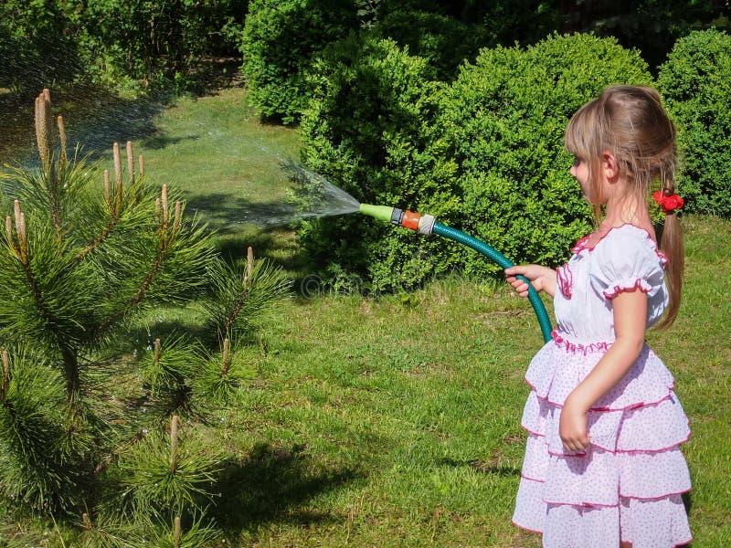 Niña bonita de 5 años con el pelo rubio largo en el vestido lovelly blanco que riega un pequeño árbol de pino en el jardín imagenes de archivo