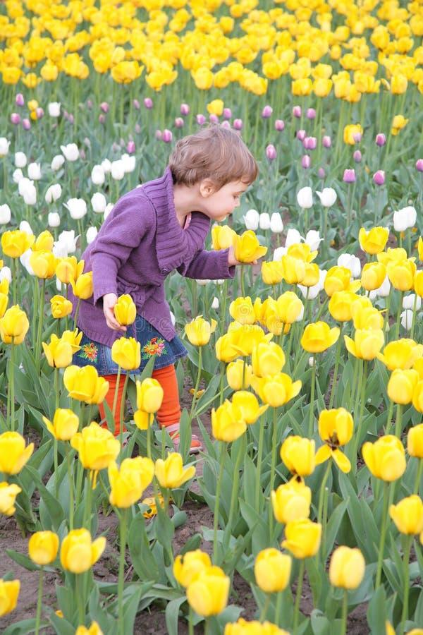 Niña en el campo de tulipanes fotos de archivo libres de regalías