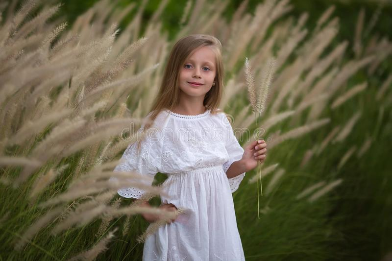 Niña joven con el pelo largo, el caminar solo del vestido blanco en campo y recogida de las flores para un ramo niña con a fotos de archivo libres de regalías