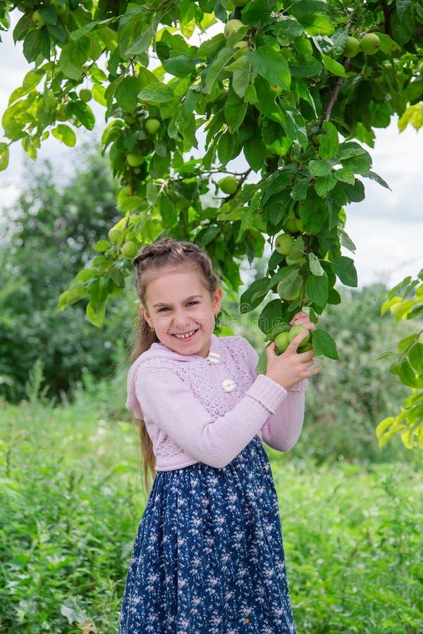 Niña linda en las ramas de un manzano en día soleado del verano imagen de archivo