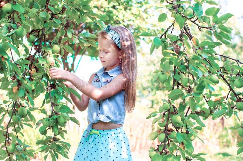Niña linda que coge manzanas en jardín foto de archivo