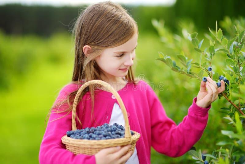 Niña linda que escoge bayas frescas en granja orgánica del arándano en día de verano caliente imagenes de archivo