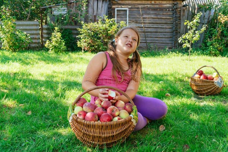 Niña linda que juega con la cesta llena de manzanas en un fondo de la hierba verde en el día soleado imágenes de archivo libres de regalías