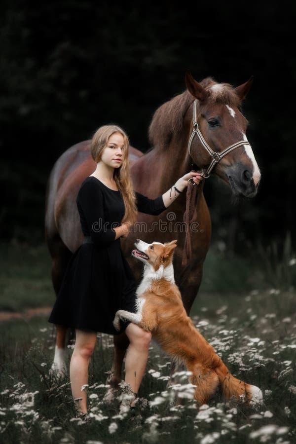 Niña linda que lleva el caballo de proyecto grande y el pequeño perro por el bosque imagenes de archivo