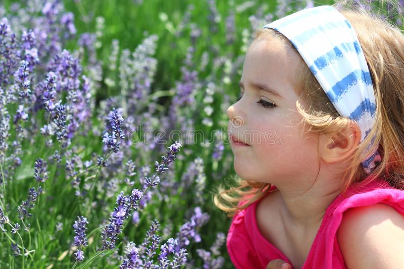 Niña pequeña que goza del olor del campo de la lavanda, retrato del primer fotos de archivo libres de regalías