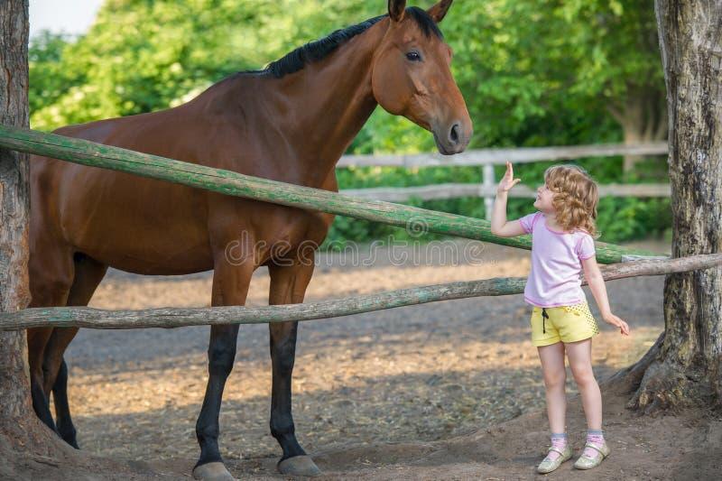 Niña que frota ligeramente un caballo, colocándose cerca de la cerca en el establo fotografía de archivo