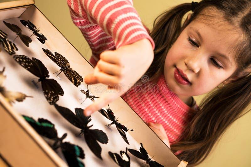 Niña que investiga la colección de la entomología de mariposas tropicales fotografía de archivo libre de regalías