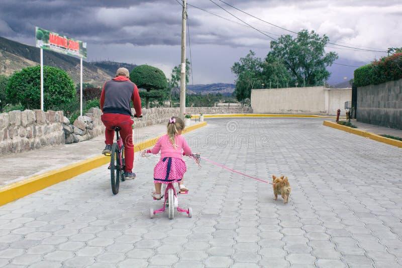 Niña que monta una bici con el papá y con un perro de la chihuahua al aire libre fotografía de archivo libre de regalías
