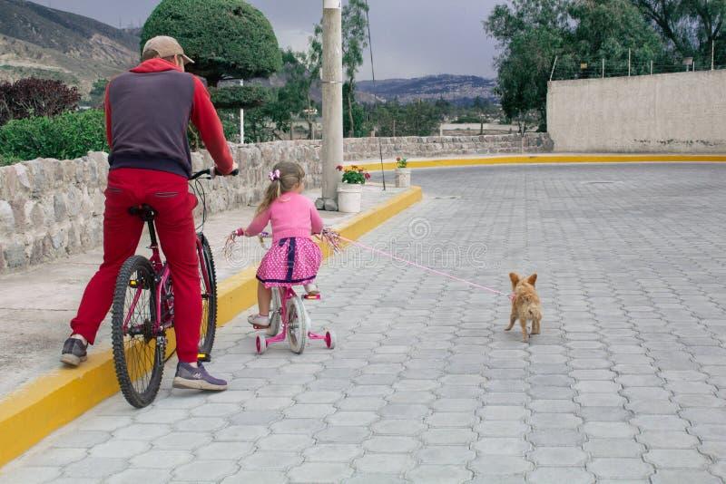 Niña que monta una bici con el papá y con un perro de la chihuahua al aire libre imagen de archivo