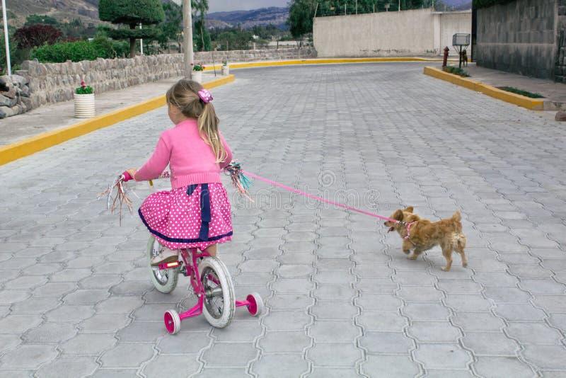 Niña que monta una bicicleta y un perro de la chihuahua en la calle debajo del cielo abierto imagen de archivo libre de regalías