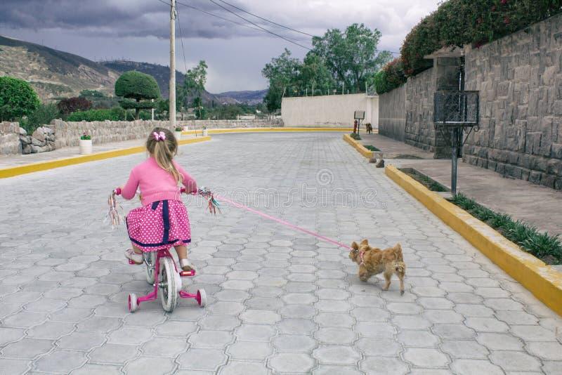 Niña que monta una bicicleta y un perro de la chihuahua en la calle debajo del cielo abierto fotos de archivo