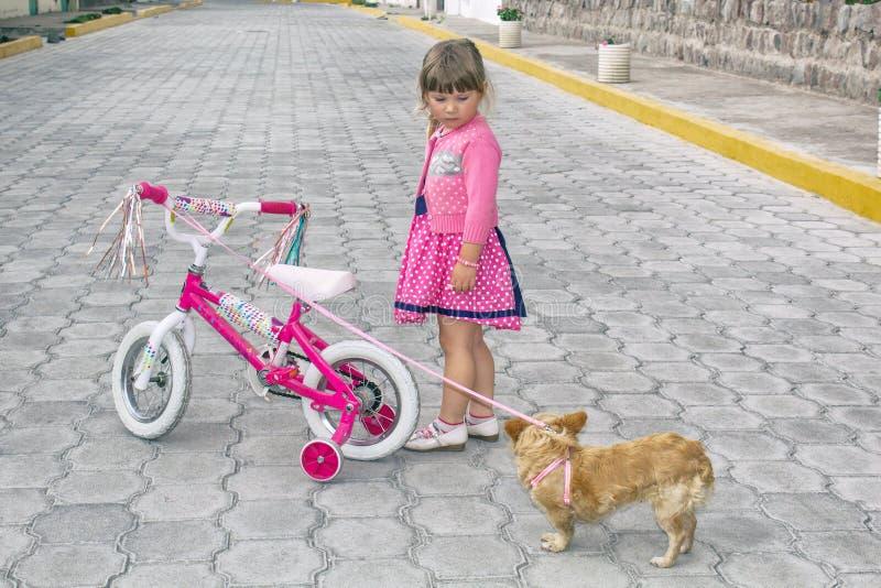 Niña que monta una bicicleta y un perro de la chihuahua en la calle debajo del cielo abierto imagenes de archivo