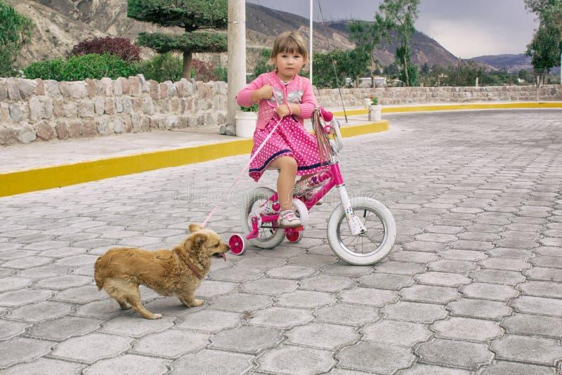 Niña que monta una bicicleta y un perro de la chihuahua en la calle debajo del cielo abierto imagen de archivo