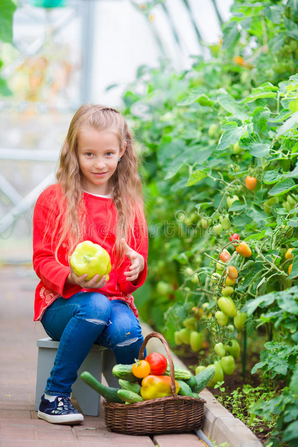 Niña que recoge los pepinos y los tomates de la cosecha en invernadero Retrato del niño con el peper verde dulce grande en manos imagen de archivo