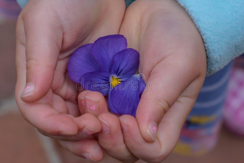 Niña que sostiene la flor púrpura en manos fotos de archivo libres de regalías