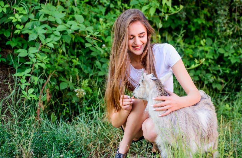 Niña y hierba verde caprina Concepto agrícola y agrícola Animales de aldea Proteger a los animales Ocupación veterinaria Tratamie imagen de archivo libre de regalías