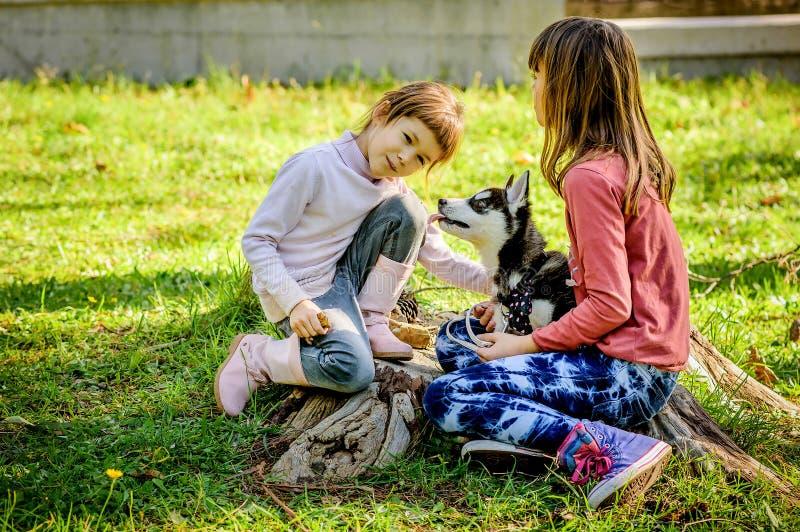 Niñas que juegan con el perrito fornido en el parque fotografía de archivo