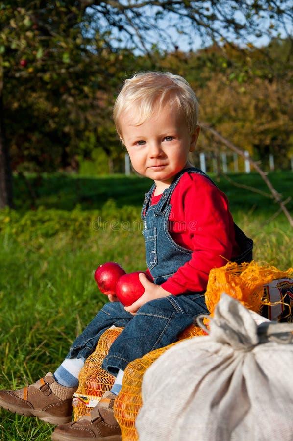Niño adorable que come manzanas rojas foto de archivo libre de regalías