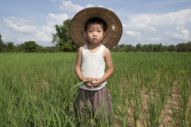 Niño asiático del retrato en el campo de arroz imagen de archivo
