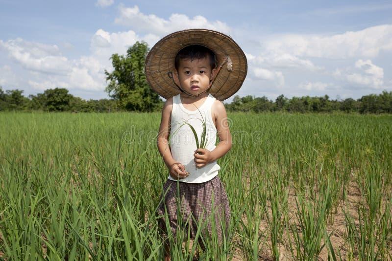 Niño asiático del retrato en el campo de arroz imágenes de archivo libres de regalías