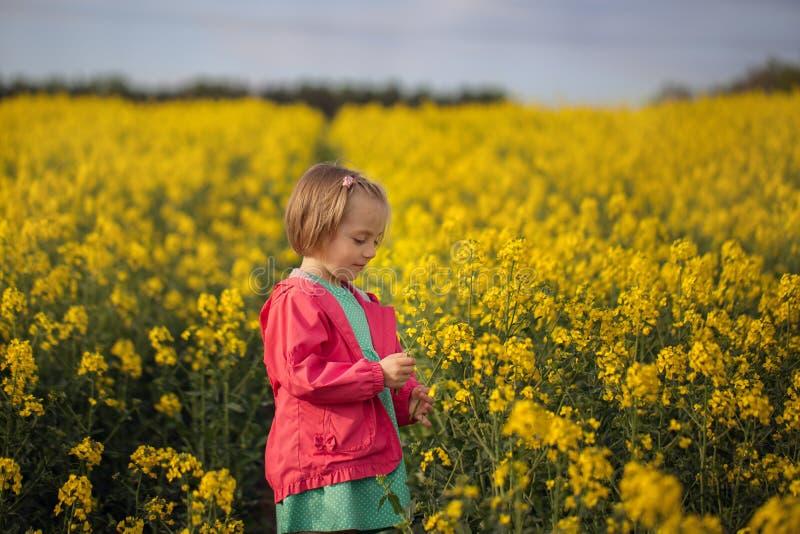 Niño bonito que camina en el campo de flores amarillas en un día de verano soleado foto de archivo libre de regalías