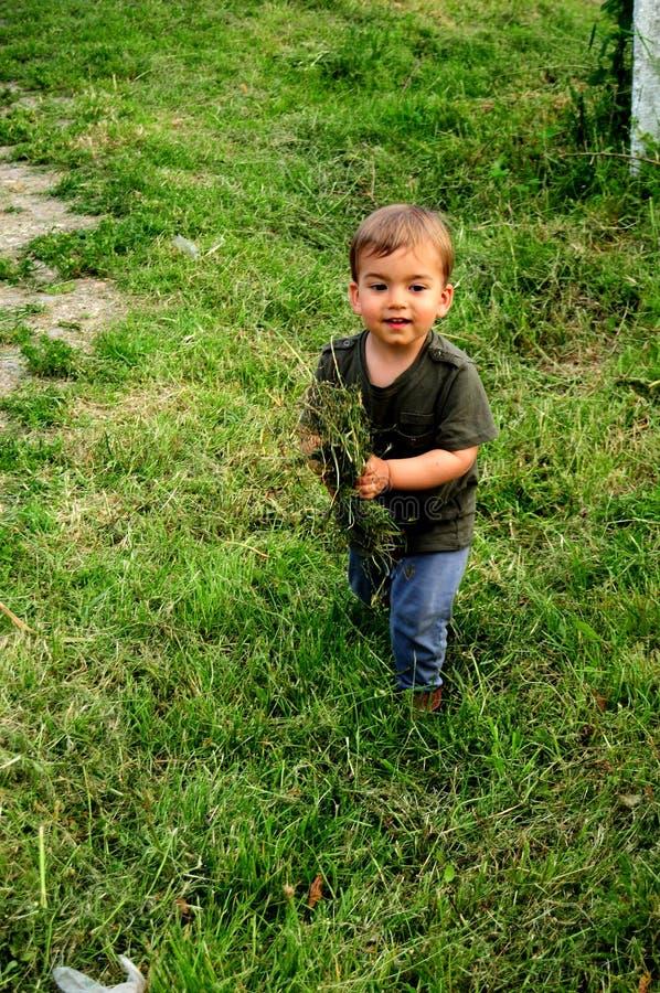 Niño con la hierba en sus manos fotos de archivo libres de regalías