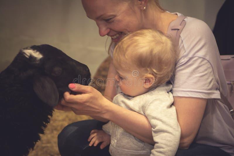 Niño con la madre que frota ligeramente un animal en el zoo-granja fotos de archivo libres de regalías