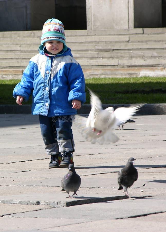 Niño con la paloma de la mosca fotografía de archivo