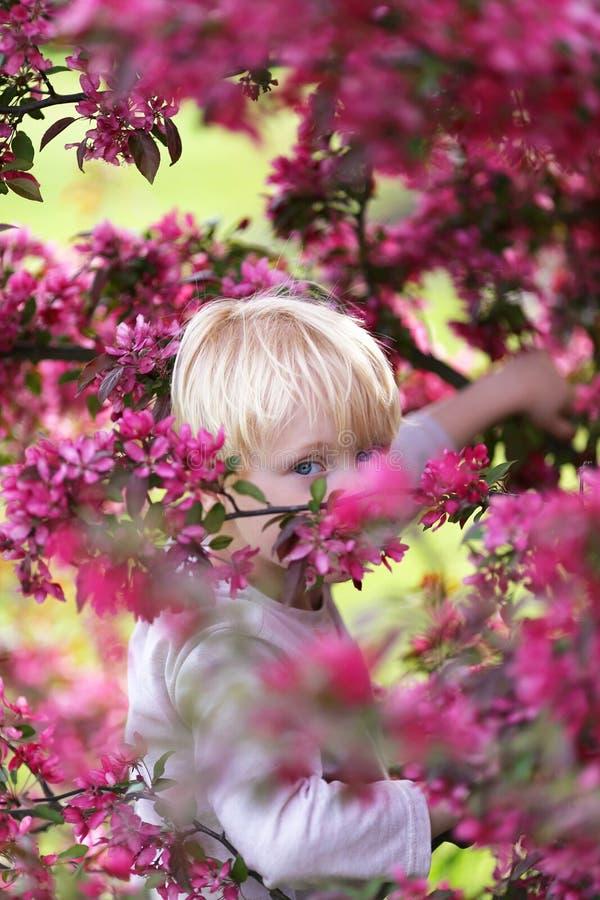 Niño con los ojos azules brillantes que miran a escondidas hacia fuera con Crabapple rosado T imagen de archivo libre de regalías