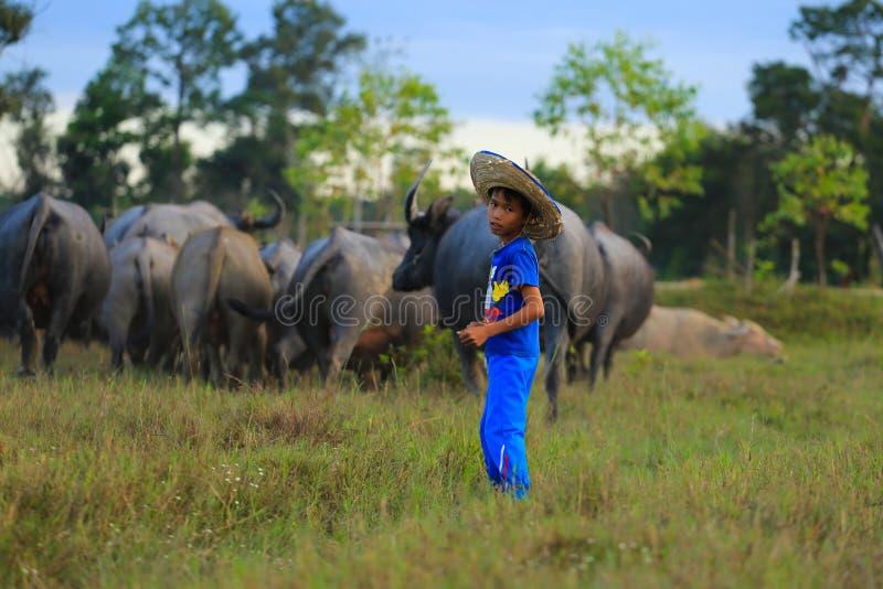 Download Niño con su búfalo fotografía editorial. Imagen de fondo - 64208527