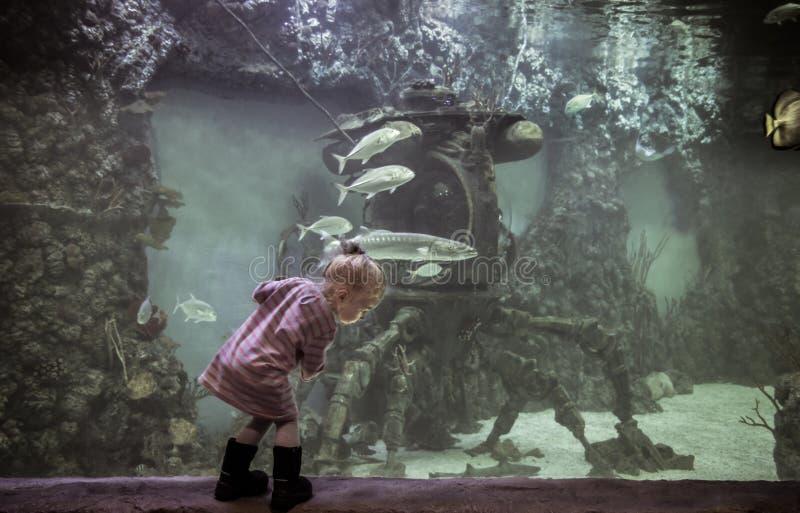 Niño curioso que explora el mundo subacuático con la nave hundida del bathyscaphe entre pescados flotantes en aqu marino grande f fotografía de archivo libre de regalías