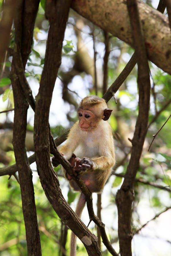 Niño de monos foto de archivo