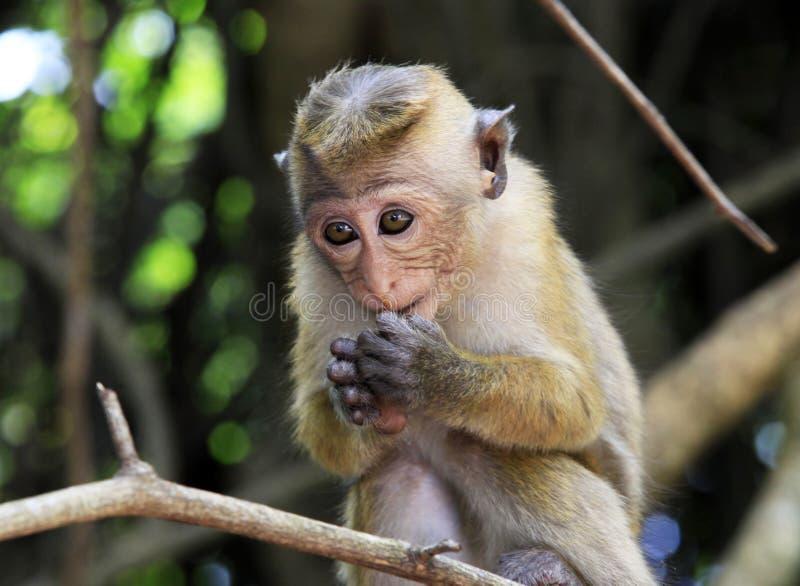 Niño de monos foto de archivo libre de regalías