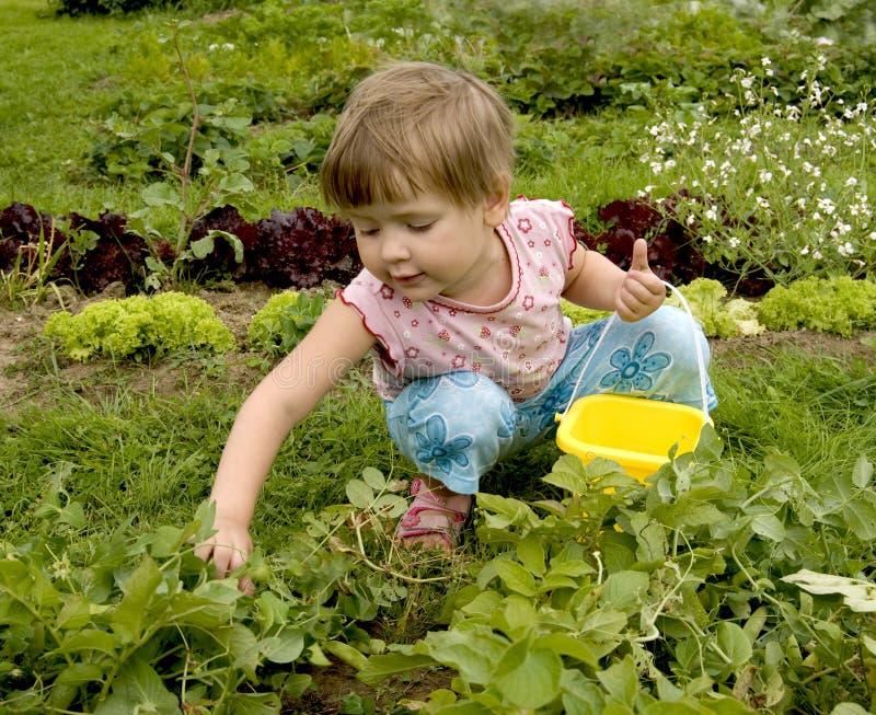 Niño en jardín de cocina imagen de archivo
