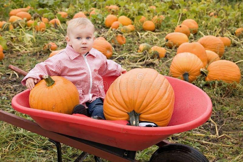 Niño en la granja de la calabaza imagen de archivo