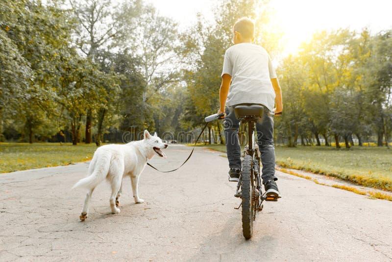 Niño en una bici con el perro esquimal blanco del perro en el camino en el parque, visión trasera del muchacho foto de archivo libre de regalías