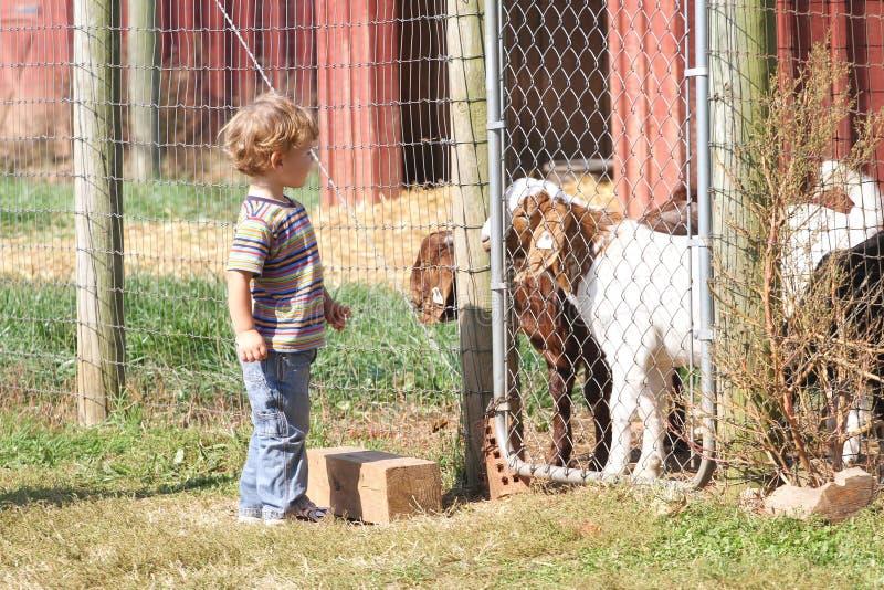Niño en una granja imágenes de archivo libres de regalías