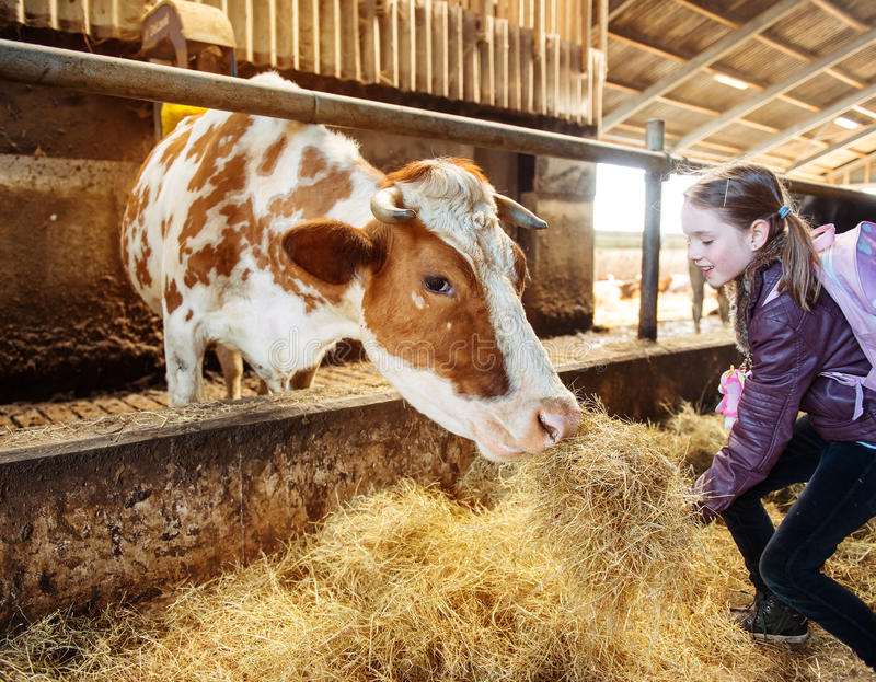 Niño en una granja orgánica de la leche imágenes de archivo libres de regalías
