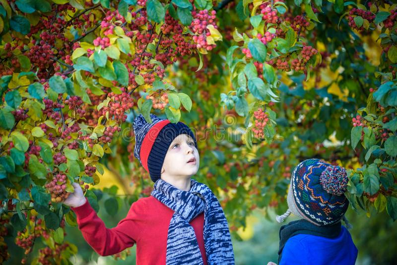 Niño en una granja en otoño Niño pequeño y su amigo del hermano que juegan en huerta decorativa del manzano Fruta de la selección imagenes de archivo