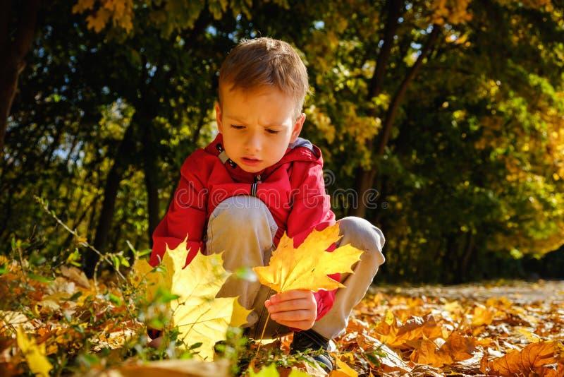 Niño feliz y otoño en un parque El niño se divierte que juega en hojas de la caída imagenes de archivo