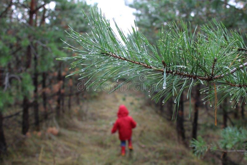 Niño funcionado con en el bosque imagen de archivo